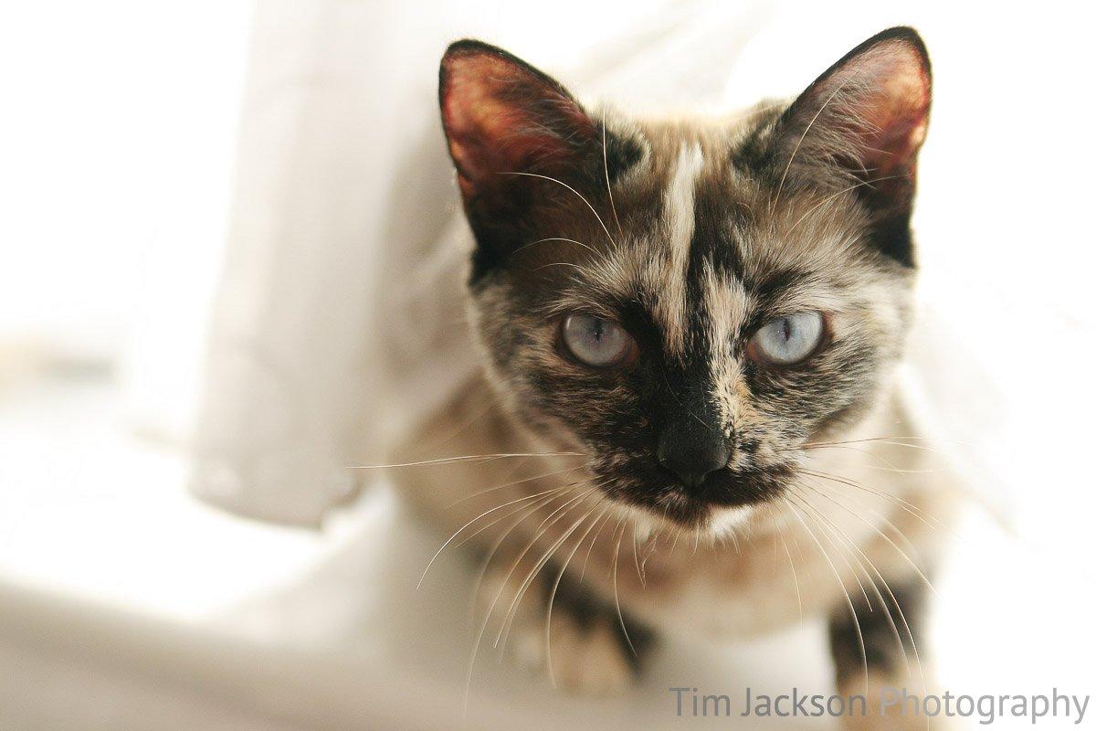 Mischief Photograph by Tim Jackson