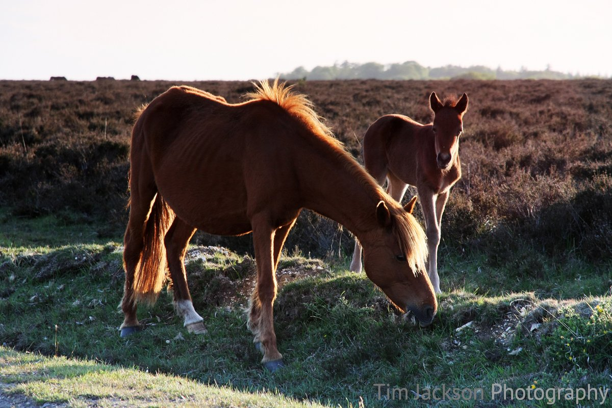New Forest Foal Photograph by Tim Jackson
