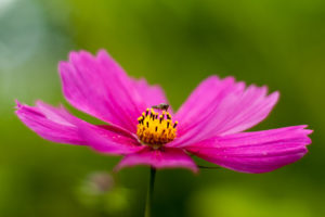 An insect sat on a flower.