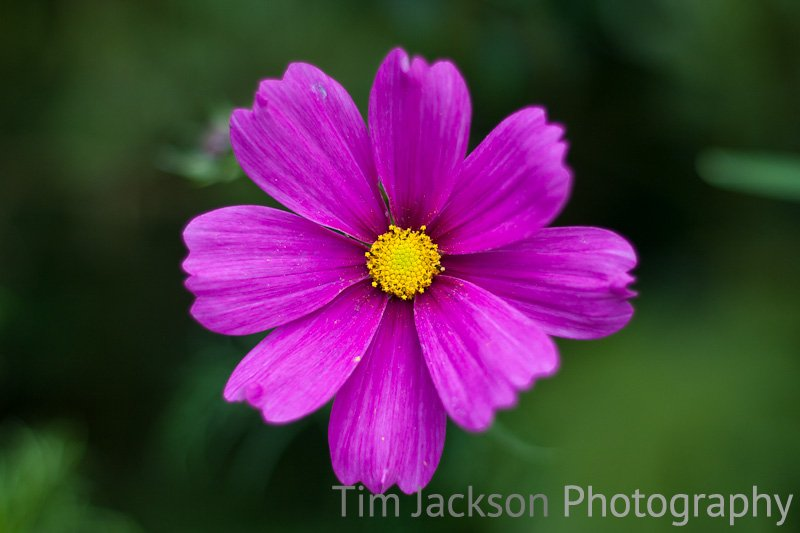 Purple Photograph by Tim Jackson