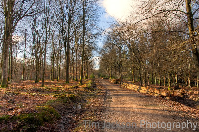 Amberwood New Forest