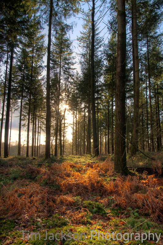 Late Afternoon Sun New Forest Photograph by Tim Jackson