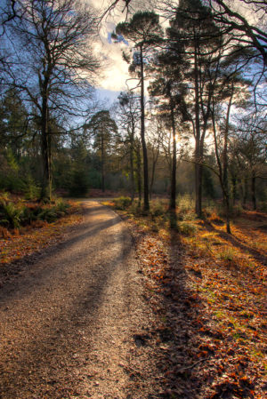 Stroll Through Sloden New Forest