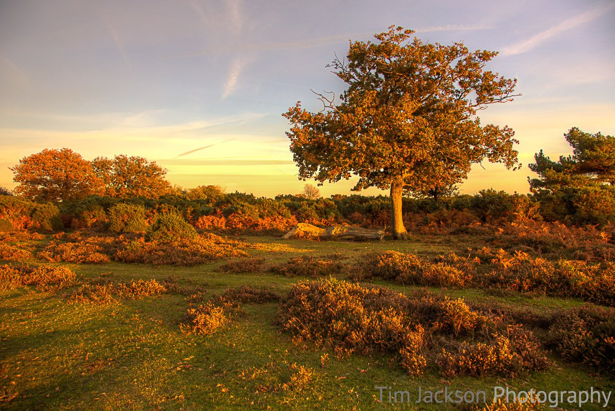 Ashley Walk Bombing Range, New Forest Ashley Walk Bombing Range at Sunset Photograph by Tim Jackson
