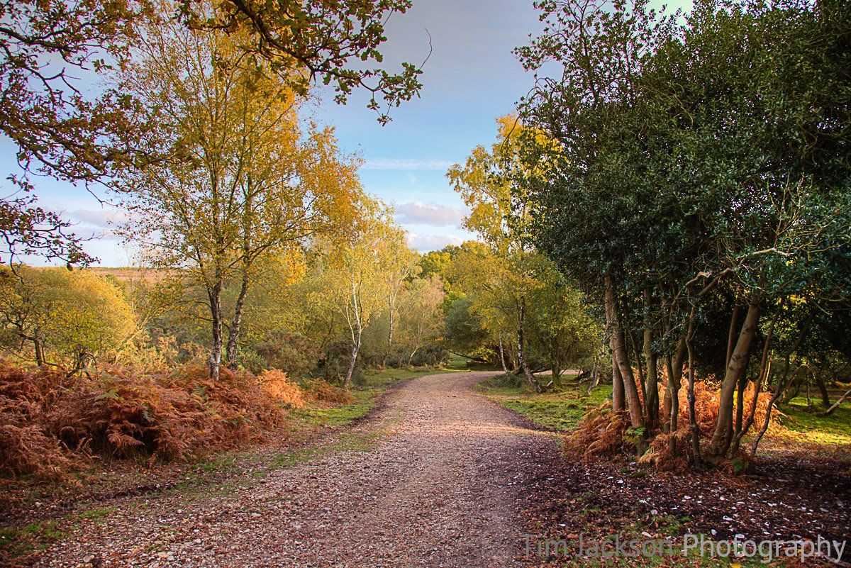 Ashley Walk Bombing Range, New Forest Autumn Forest Photograph by Tim Jackson