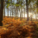 Ashley Walk Bombing Range, New Forest Forest Magic Photograph by Tim Jackson