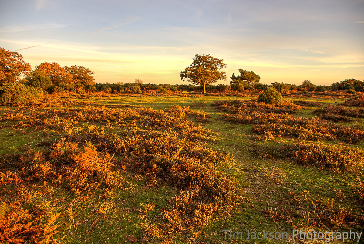 Ashley Walk Bombing Range, New Forest Walking Ashley Bombing Range Photograph by Tim Jackson
