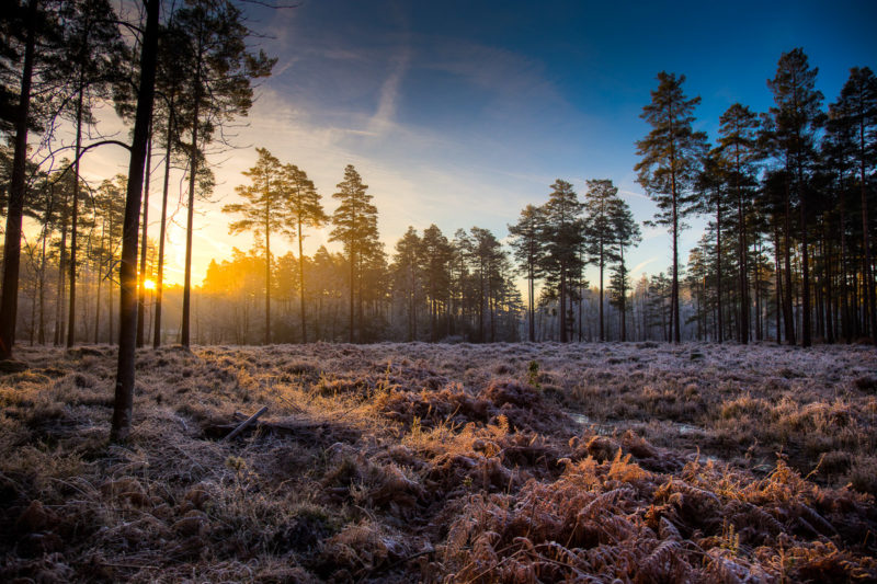 Bolderwood New Forest Sunrise