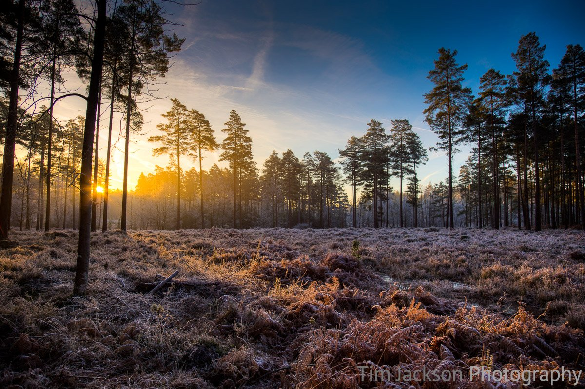 Bolderwood New Forest Sunrise Photograph by Tim Jackson
