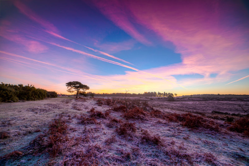 Samyang 14mm f2.8 for landscape photography. Bratley View New Forest Photograph by Tim Jackson