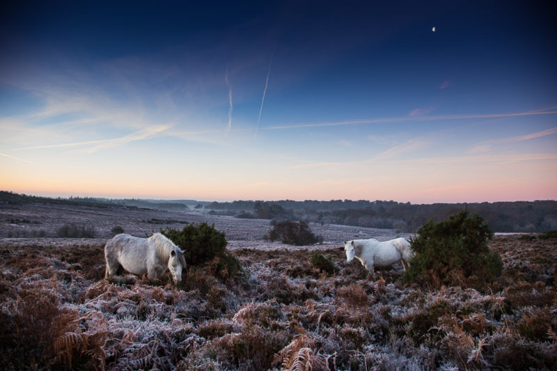 New Forest Ponies Bratley View New Forest Ponies Bratley View Photograph by Tim Jackson