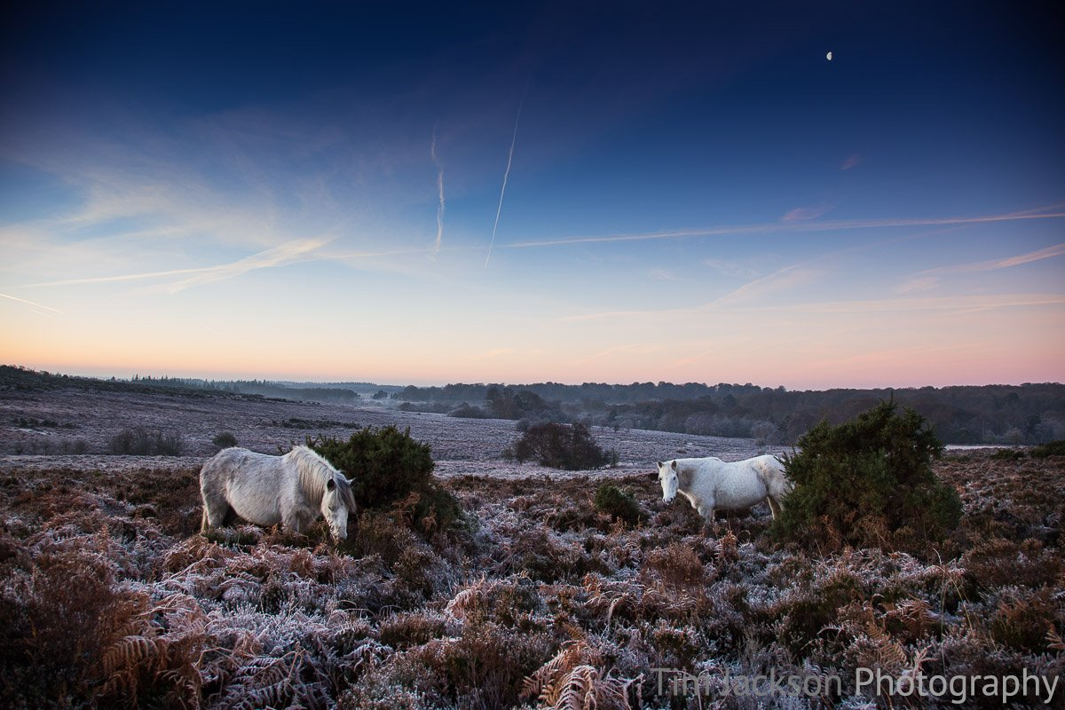 New Forest Ponies Bratley View Photograph by Tim Jackson