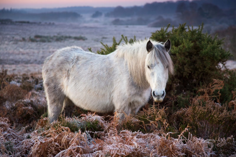 New Forest Pony Bratley View New Forest Pony Bratley View Photograph by Tim Jackson
