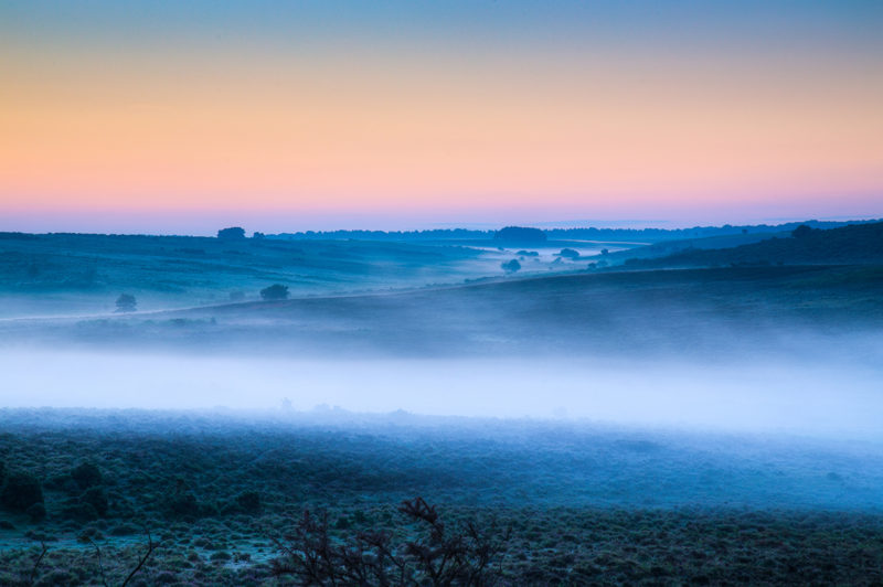 Misty Morning New Forest Misty Morning New Forest Photograph by Tim Jackson