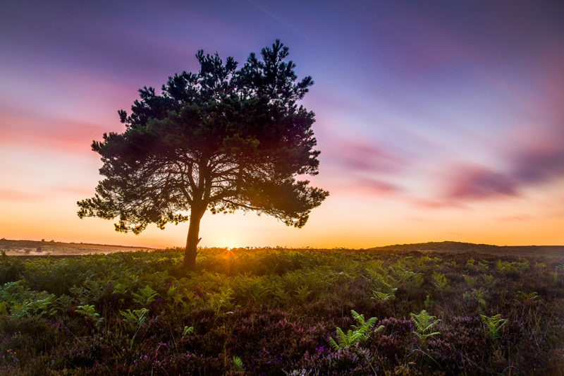 New Forest Sunrise New Forest Sunrise Photograph by Tim Jackson
