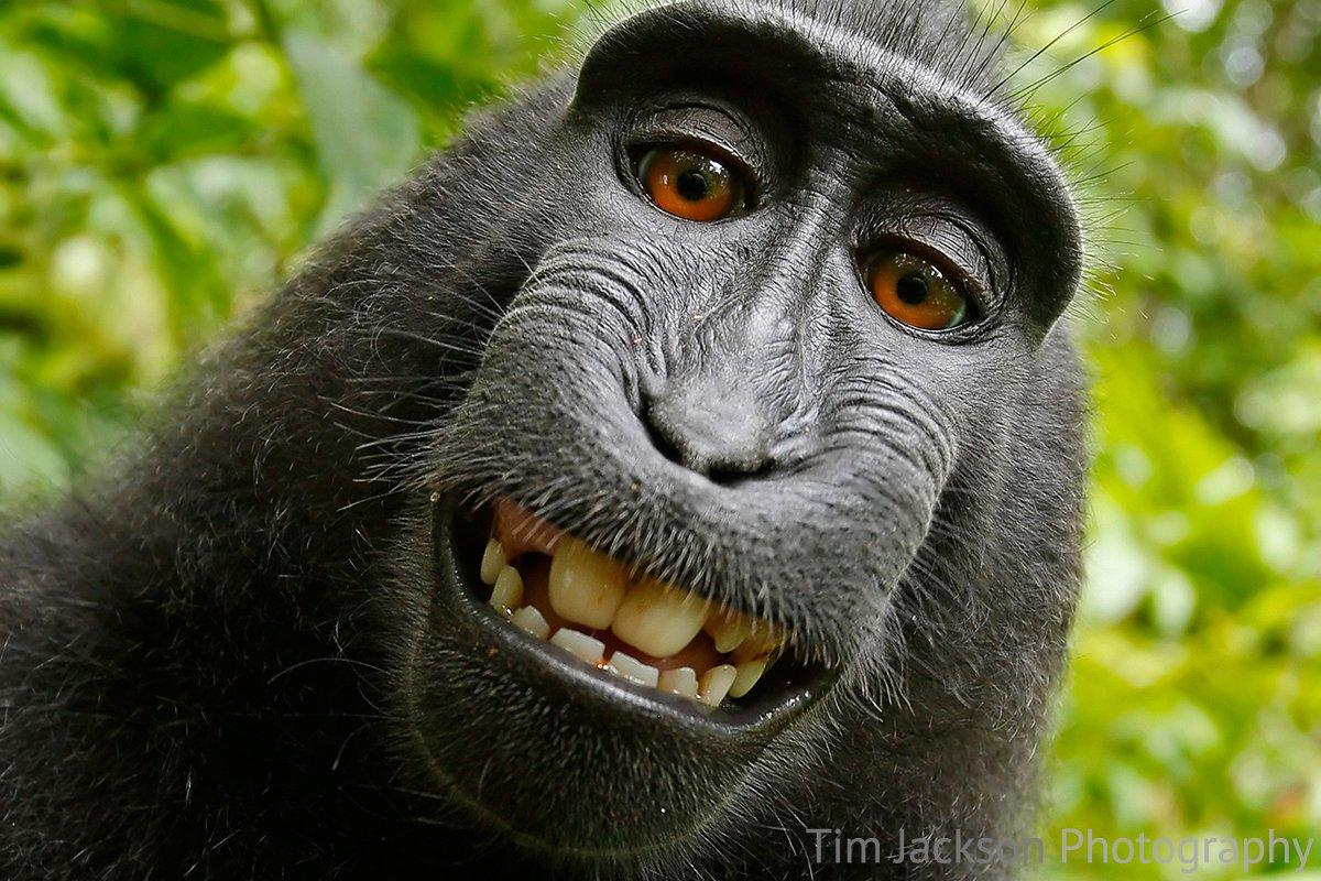 Infinite Monkeys with Cameras 4