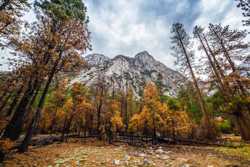 Buck Peak Kings Canyon Buck Peak Kings Canyon Photograph by Tim Jackson