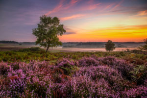 Landscape Photographer New Forest Dawn Mist Photograph by Tim Jackson