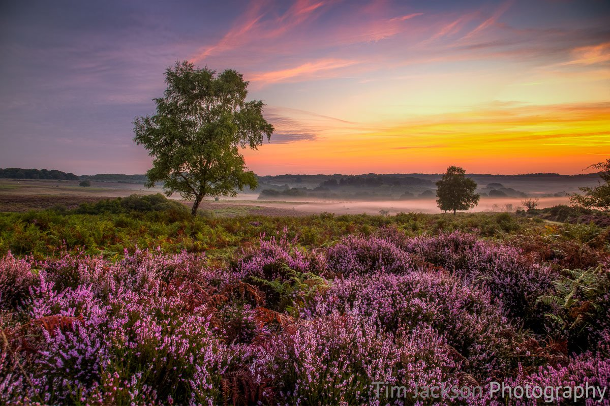 New Forest Dawn Mist Photograph by Tim Jackson